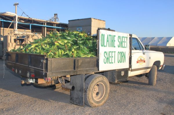 Olathe Sweet Sweet Corn truck (photo)